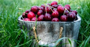 Polson Business Community Cherry Festival